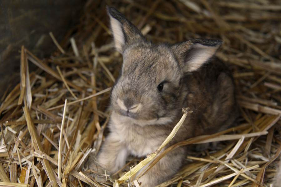 baby rabbit ScaleWidthWzkwMF0
